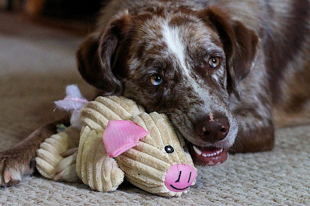 Zabawki, których potrzebuje Twój pies